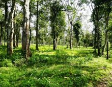 Agricultural land for sale in Somwarpet,Karnataka