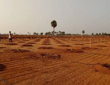 Farm plots with sandal plants in Choutuppal, Hyderabad.
