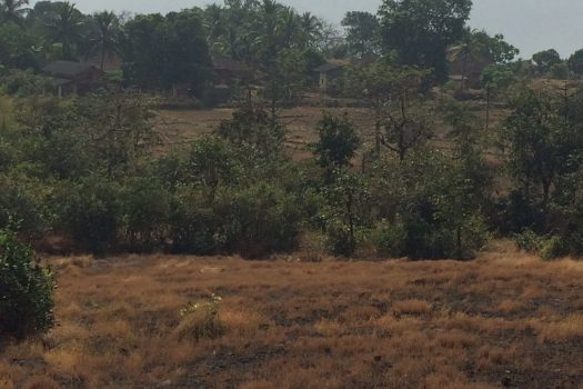 Agriculture land available near the beach in Dapoli