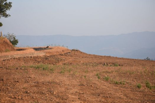 Agriculture Land for sale in Velhe Pune