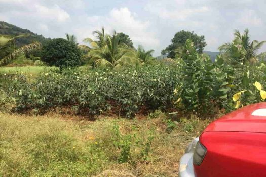 Farm plot for sale in Khed Shivapur