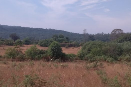 Agriculture Land is available in Gaganbawda in Kolhapur District